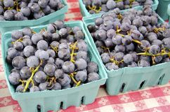 Concord Grapes Royalty Free Stock Photos