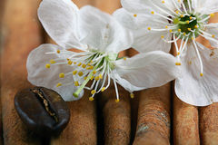 Concorda o perfume da fragrância da cereja Fotos de Stock Royalty Free