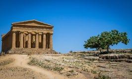 Concordia tempel i dalen av tempel - Agrigento, Sicilien, Italien Royaltyfri Fotografi