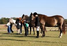 Concorrentes de TRP com alimentadores Foto de Stock Royalty Free