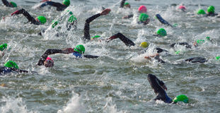 Concorrentes que nadam para fora na água aberta no início do Triathlon Imagens de Stock Royalty Free