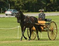 Concorrenza del carrello e del cavallo Fotografia Stock