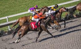 Concorrenza del cavallo da corsa Fotografie Stock