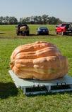 Concorrenza della zucca gigante Fotografie Stock