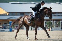 Concorrenza di salto in Pezinok, Slovacchia del cavallo Immagine Stock Libera da Diritti