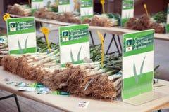 Concorrenza per le migliori cipolle coltivate a Valls fotografia stock libera da diritti