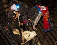 Concorrenza professionale di guida del toro Fotografie Stock Libere da Diritti