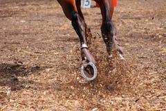 Concorsi sui concours - il cavallo salta su un fi Fotografie Stock Libere da Diritti