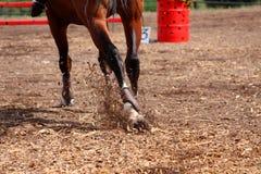 Concorsi sui concours - il cavallo salta su un fi Fotografia Stock