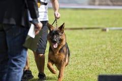 Concorso canino fotografie stock libere da diritti