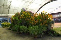 Concours d'orchidée Image stock