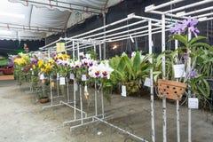 Concours d'orchidée Photos libres de droits