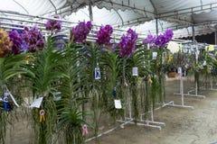 Concours d'orchidée images libres de droits