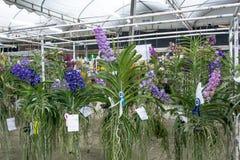 Concours d'orchidée photos stock