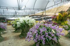 Concours d'orchidée image libre de droits