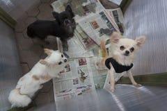 Concours de chien image stock