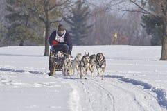 Concours mushing de traîneau de chien d'hiver de chien images libres de droits