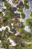 Concreet Moss Covered Texture Stock Afbeelding