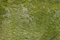 The concrete abstract texture with green mold. Stock Photo