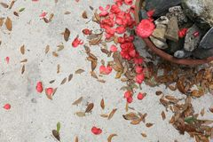Concrete Background with Flower Pedals, Leaves and a Rock Pot stock photo
