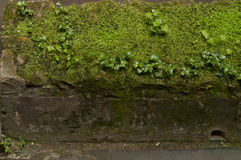 Concrete beam overgrown with moss Royalty Free Stock Photo