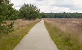 A concrete bicycle way leading thorugh the heathland of the hoge veluwe. A concrete bicycle way leading thorugh the heathland in the hoge veluwe in holland Royalty Free Stock Image