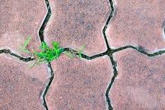 Concrete block or cobble  pavement slab close up Royalty Free Stock Photos