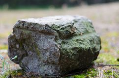 Concrete block in the middle of a forest road. Gross texture on natural green natural background. Selective focus. Strong blur stock image