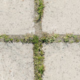 Concrete block texture with small plant high resolution. Stock Images