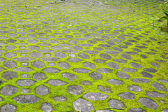 Concrete block wall with green moss Stock Photo