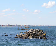 Concrete breakwater  in Mamaia, Romania 2 Stock Image