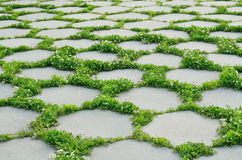 Concrete brick path. With green grass and flowers royalty free stock image