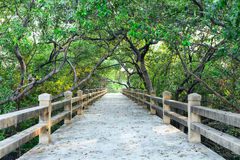 Concrete bridge into forest Royalty Free Stock Photo