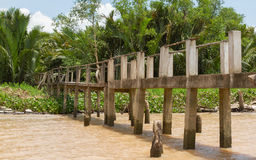 Concrete bridge into the jungle Royalty Free Stock Photo