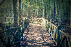 Concrete bridge leading to mysterious swamp forest. Under sunlight in the morning Royalty Free Stock Photos