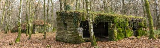 Concrete buidlings in het bos bij Kamp Marguerre, Wereldoorlog I Royalty-vrije Stock Fotografie