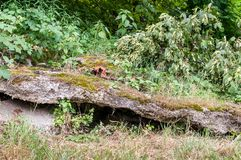 Concrete collapsed construction remains of old military bunker from world war two in the forest royalty free stock image