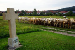 Concrete cross. On the pasture and cows in Germany royalty free stock images