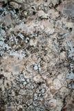 Concrete de muurachtergrond van Grunge Stock Foto's