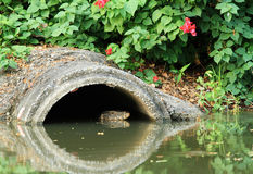 Drainage pipe with water monitor Royalty Free Stock Image
