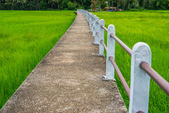 Concrete elevated walkway in green rice field in Ubonratchathani, Thailand Royalty Free Stock Photos