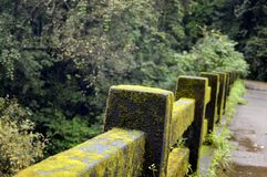 Concrete Fence With Green Moss Near Green Tree Royalty Free Stock Photography
