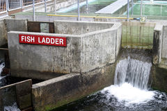 Concrete fish ladder at salmon farm Stock Photography