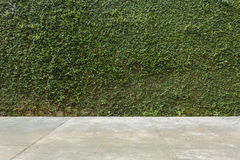 Free Concrete Floor And Green Leaf Ivy Plant Covered Stone Fence Wall Royalty Free Stock Image - 78982186