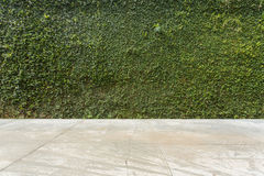 Free Concrete Floor And Green Leaf Ivy Plant Covered Stone Fence Wall Stock Image - 79188861