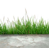 Concrete floor with green grass Royalty Free Stock Photography