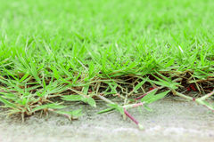 Concrete floor and green grass Royalty Free Stock Image