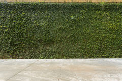 Concrete floor and green leaf ivy plant covered stone fence wall. Background stock photo