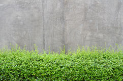 Concrete floor with green leaves Stock Images