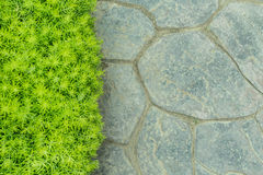 Concrete floor and green plant Royalty Free Stock Photo